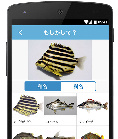 app_sakanamikke01