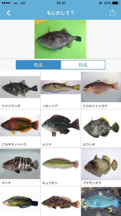 sakanamikke02