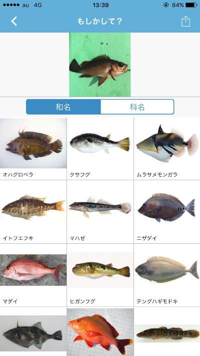 sakanamikke04